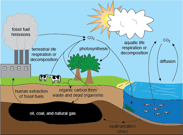 What is Climate Change Climate Change – The Carbon Cycle Worksheet
